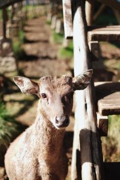 Hello, Deer